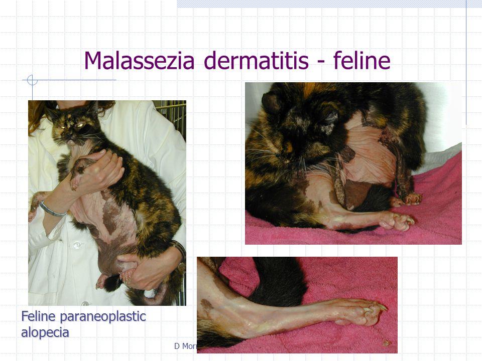 D Morris ACVD Resident Review 2003 Malassezia dermatitis - feline Feline paraneoplastic alopecia
