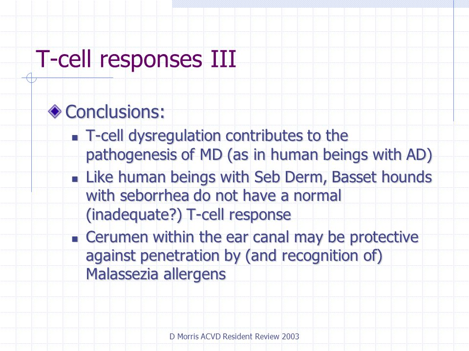 D Morris ACVD Resident Review 2003 T-cell responses III Conclusions: T-cell dysregulation contributes to the pathogenesis of MD (as in human beings with AD) T-cell dysregulation contributes to the pathogenesis of MD (as in human beings with AD) Like human beings with Seb Derm, Basset hounds with seborrhea do not have a normal (inadequate ) T-cell response Like human beings with Seb Derm, Basset hounds with seborrhea do not have a normal (inadequate ) T-cell response Cerumen within the ear canal may be protective against penetration by (and recognition of) Malassezia allergens Cerumen within the ear canal may be protective against penetration by (and recognition of) Malassezia allergens