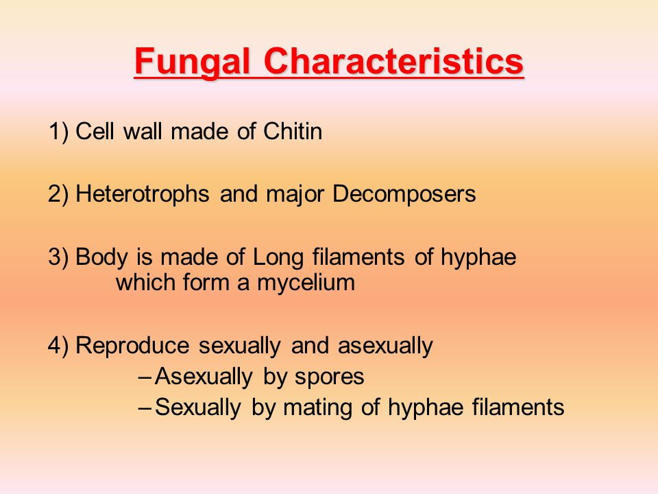 Fungal Characteristics 1) Cell wall made of Chitin 2) Heterotrophs and major Decomposers 3) Body is made of Long filaments of hyphae which form a mycelium 4) Reproduce sexually and asexually –Asexually by spores –Sexually by mating of hyphae filaments