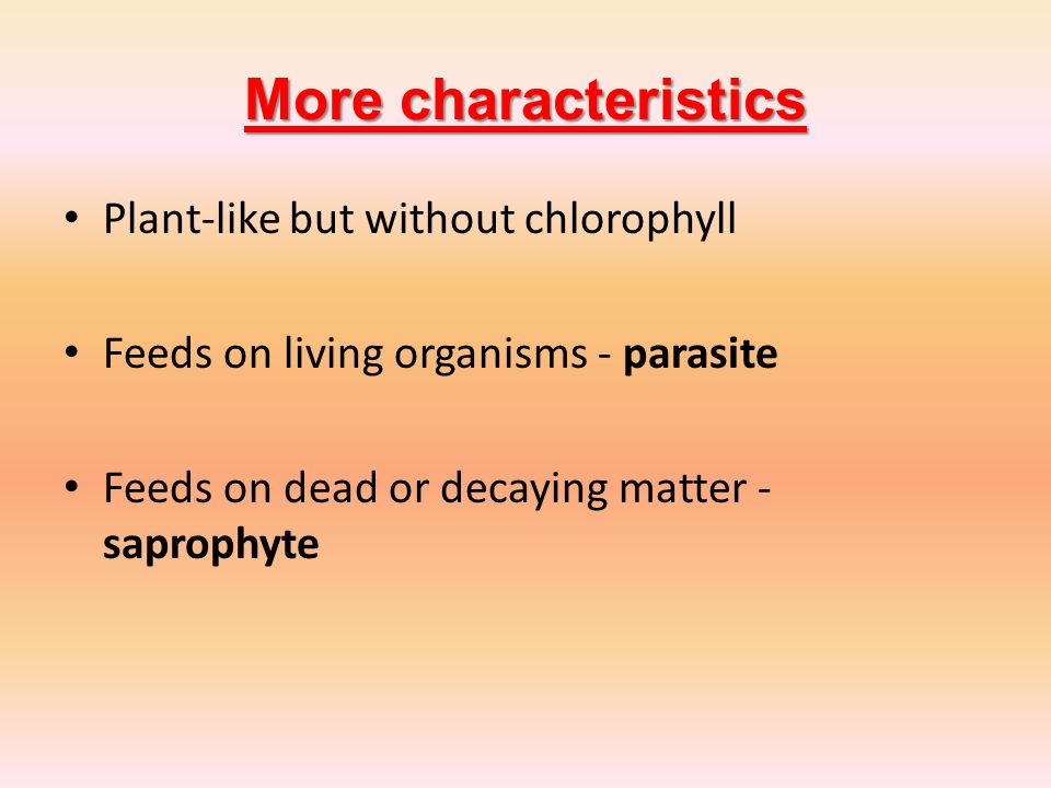 More characteristics Plant-like but without chlorophyll Feeds on living organisms - parasite Feeds on dead or decaying matter - saprophyte