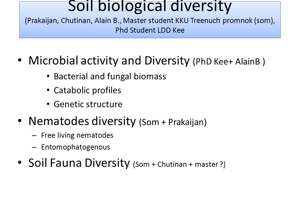 Microbial activity and Diversity (PhD Kee+ AlainB ) Bacterial and fungal biomass Catabolic profiles Genetic structure Nematodes diversity (Som + Prakaijan) – Free living nematodes – Entomophatogenous Soil Fauna Diversity (Som + Chutinan + master ) Soil biological diversity (Prakaijan, Chutinan, Alain B., Master student KKU Treenuch promnok (som), Phd Student LDD Kee Soil biological diversity (Prakaijan, Chutinan, Alain B., Master student KKU Treenuch promnok (som), Phd Student LDD Kee