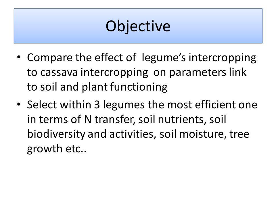 Layout characteristics Tree age: 2 years old Previous crop : Eucalyptus Crop clone: RITT251) Plot size: 25 rai (4,2ha)