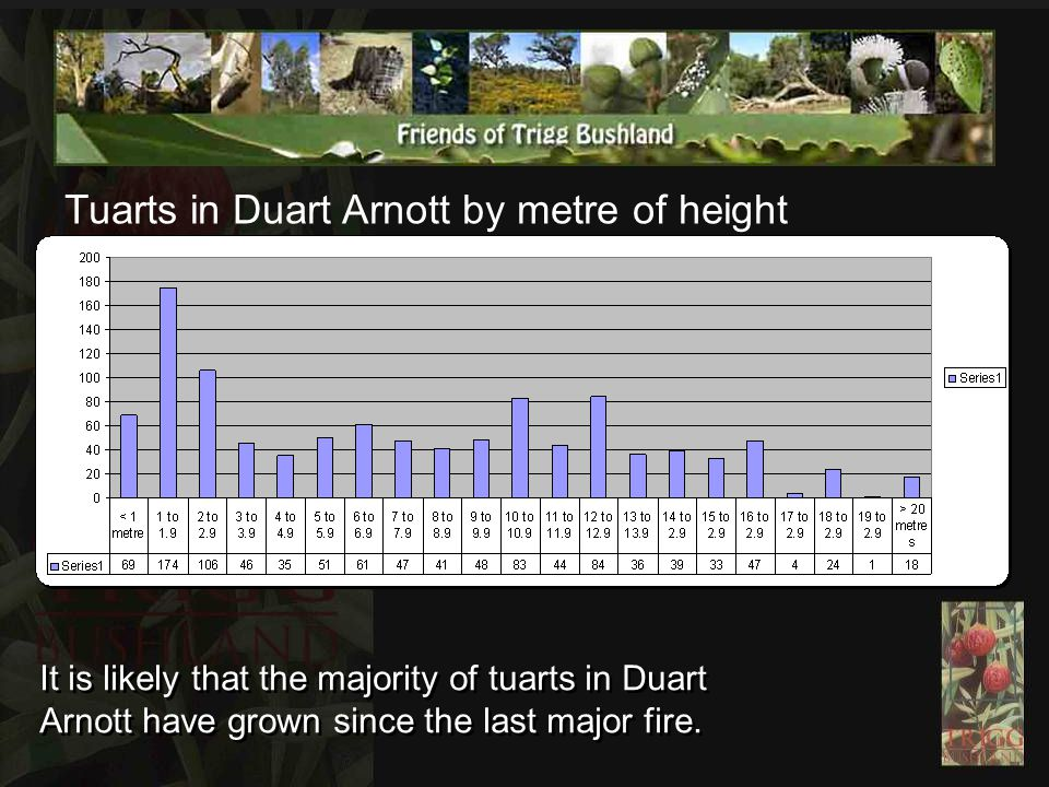 Tuarts in Duart Arnott by metre of height It is likely that the majority of tuarts in Duart Arnott have grown since the last major fire.