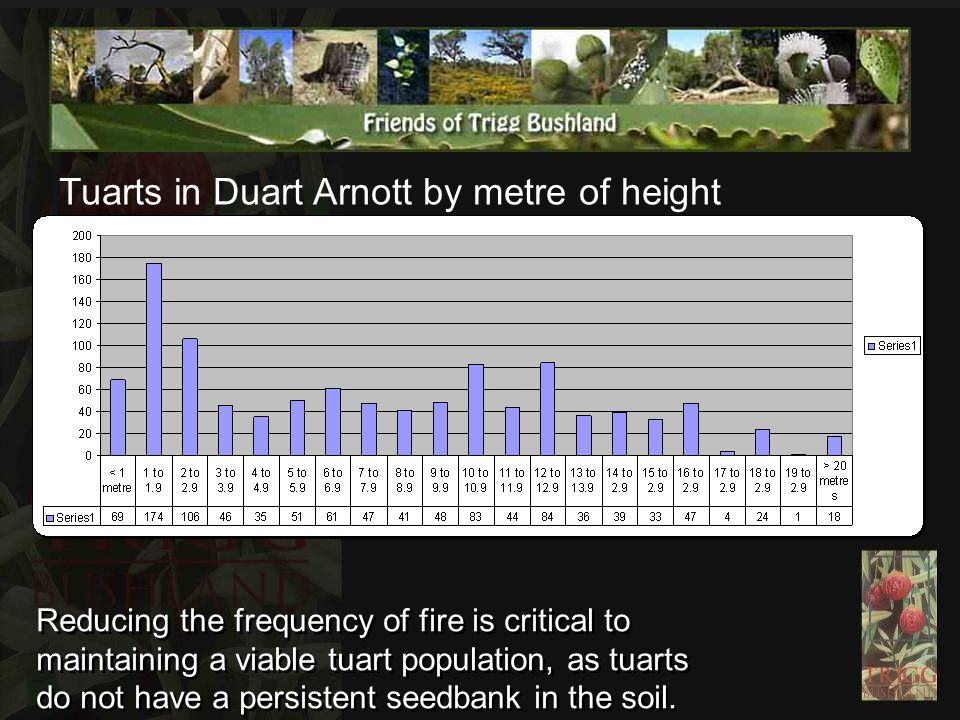 Tuarts in Duart Arnott by metre of height Reducing the frequency of fire is critical to maintaining a viable tuart population, as tuarts do not have a persistent seedbank in the soil.