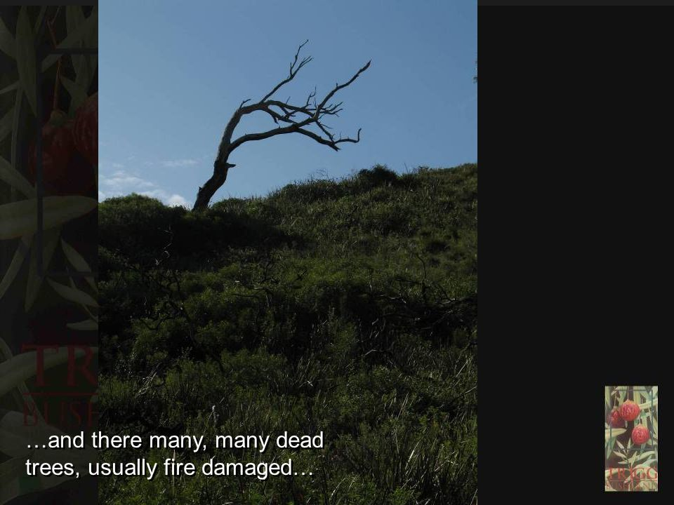 …and there many, many dead trees, usually fire damaged…