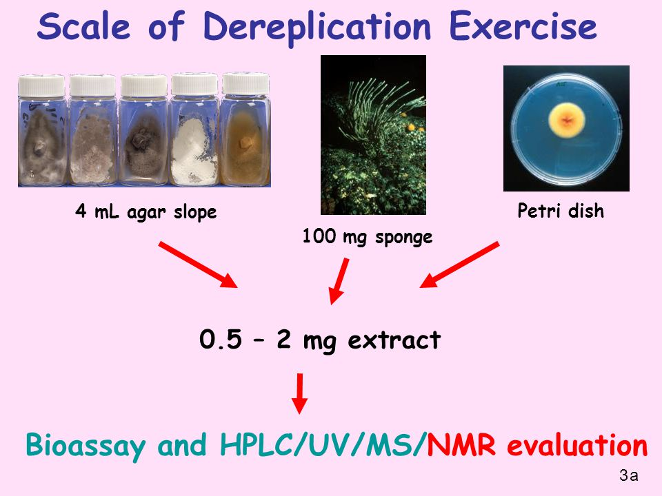 Scale of Dereplication Exercise 0.5 – 2 mg extract 4 mL agar slope Petri dish Bioassay and HPLC/UV/MS/NMR evaluation 100 mg sponge 3a