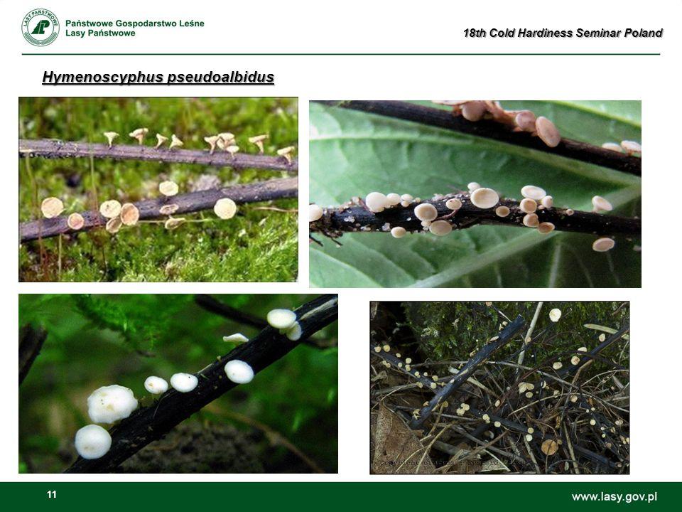 11 Hymenoscyphus pseudoalbidus 18th Cold Hardiness Seminar Poland
