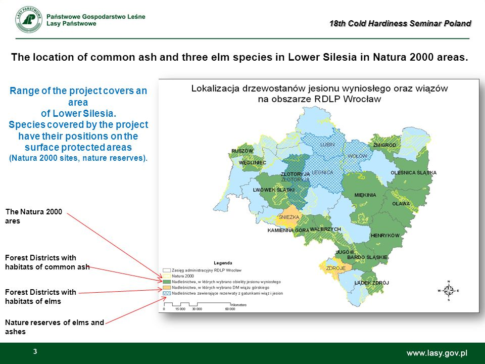 3 The Natura 2000 ares Forest Districts with habitats of elms Nature reserves of elms and ashes Forest Districts with habitats of common ash Range of the project covers an area of ​​ Lower Silesia.