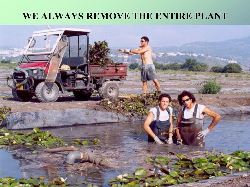 WE ALWAYS REMOVE THE ENTIRE PLANT