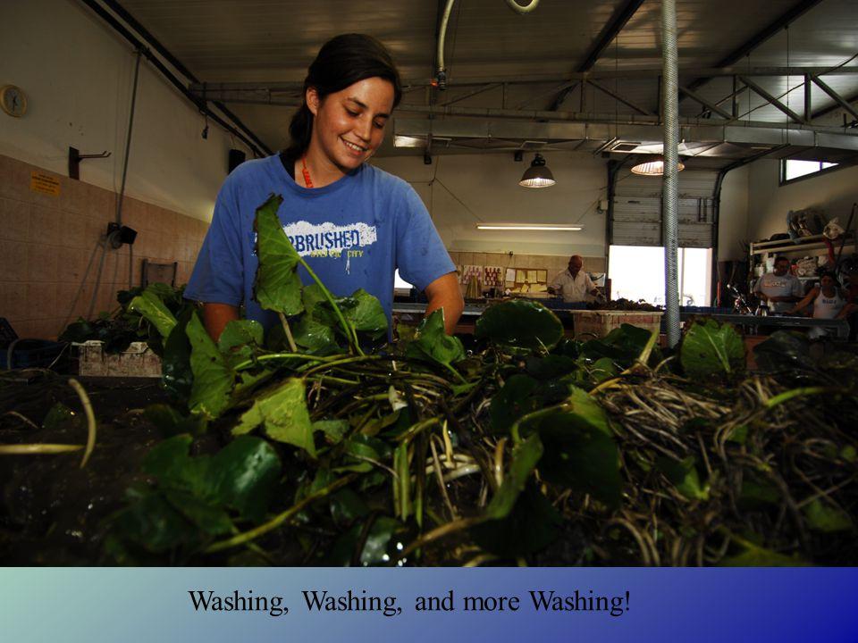 Washing, Washing, and more Washing!