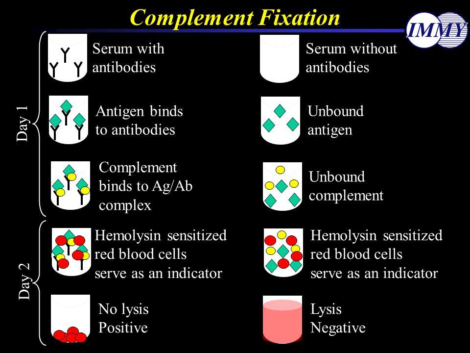 Serum without antibodies Serum with antibodies Complement Fixation Antigen binds to antibodies Unbound antigen Complement binds to Ag/Ab complex Unbou
