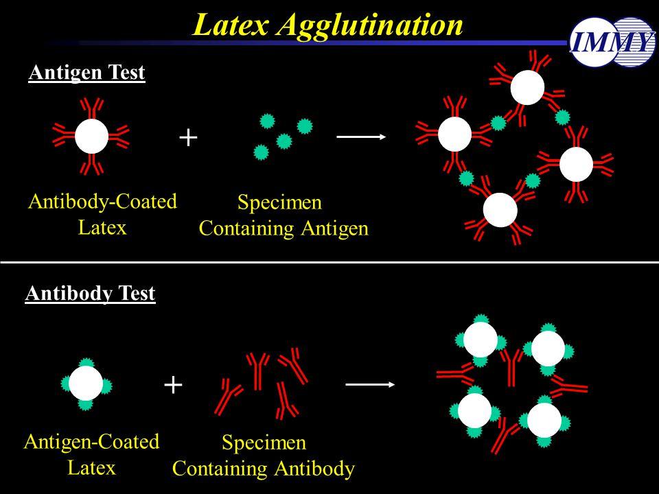 Latex Agglutination Antigen Test + Antibody-Coated Latex Specimen Containing Antigen Antibody Test Antigen-Coated Latex Specimen Containing Antibody +