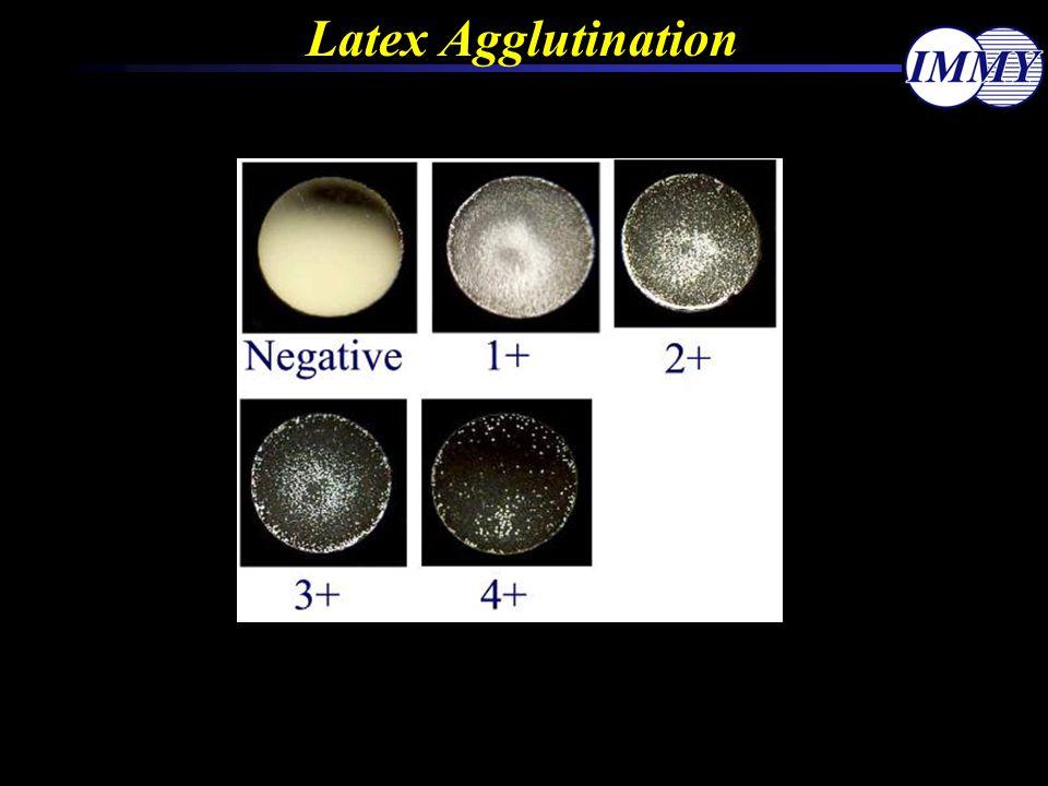 Latex Agglutination