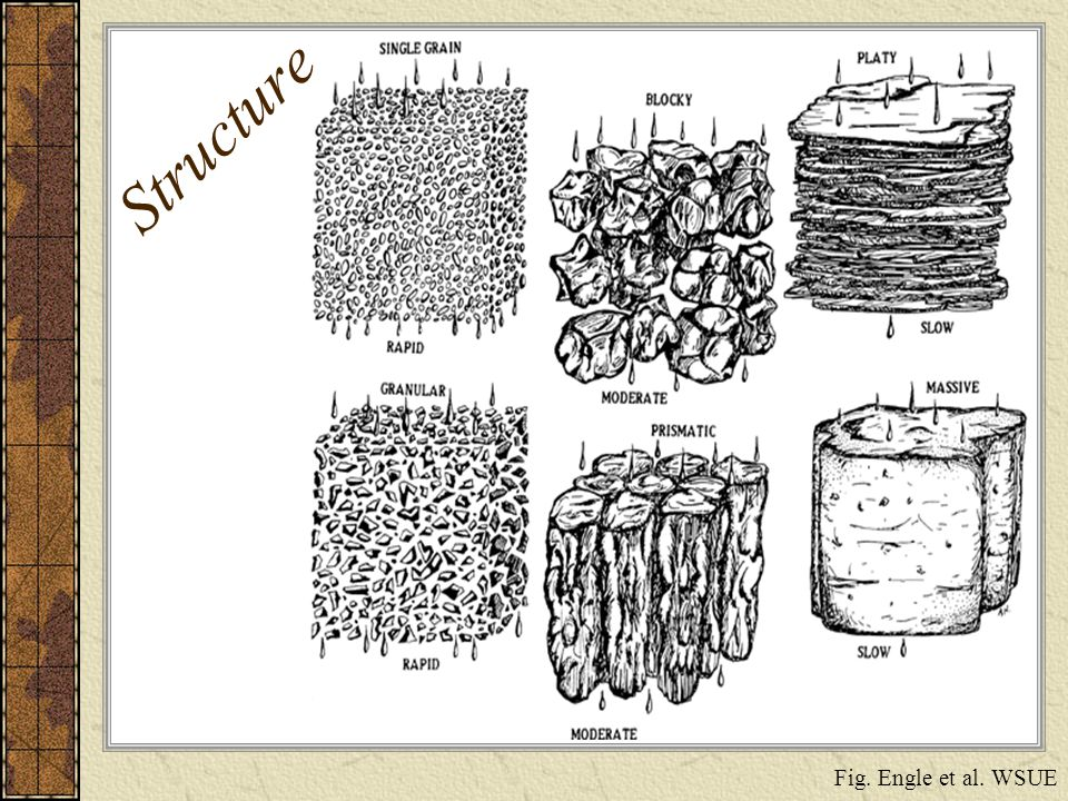 Structure Fig. Engle et al. WSUE