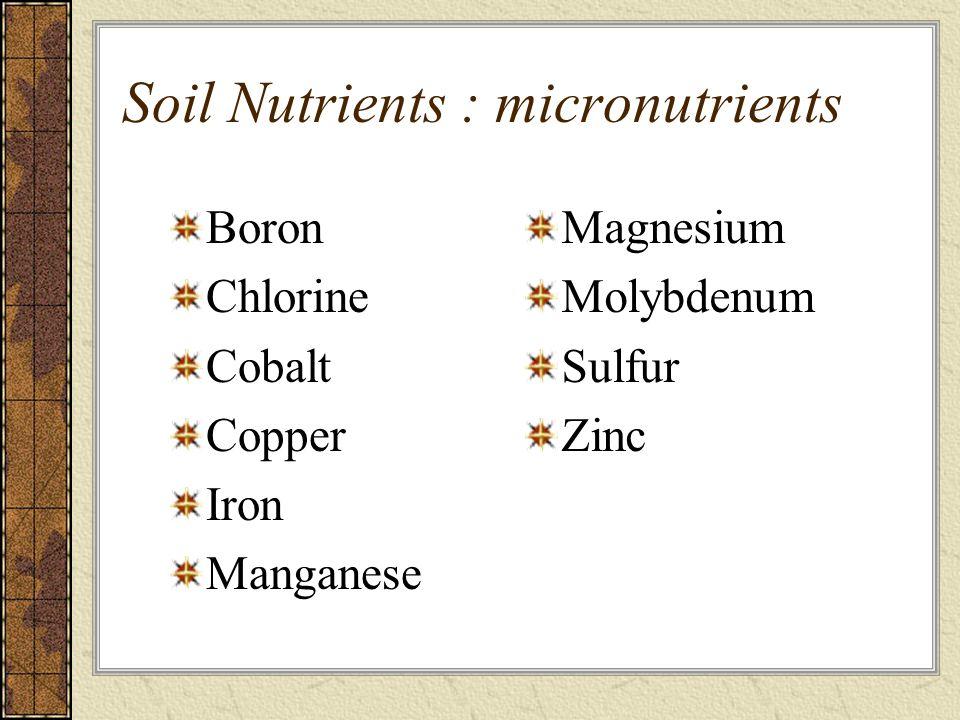 Soil Nutrients : micronutrients Boron Chlorine Cobalt Copper Iron Manganese Magnesium Molybdenum Sulfur Zinc