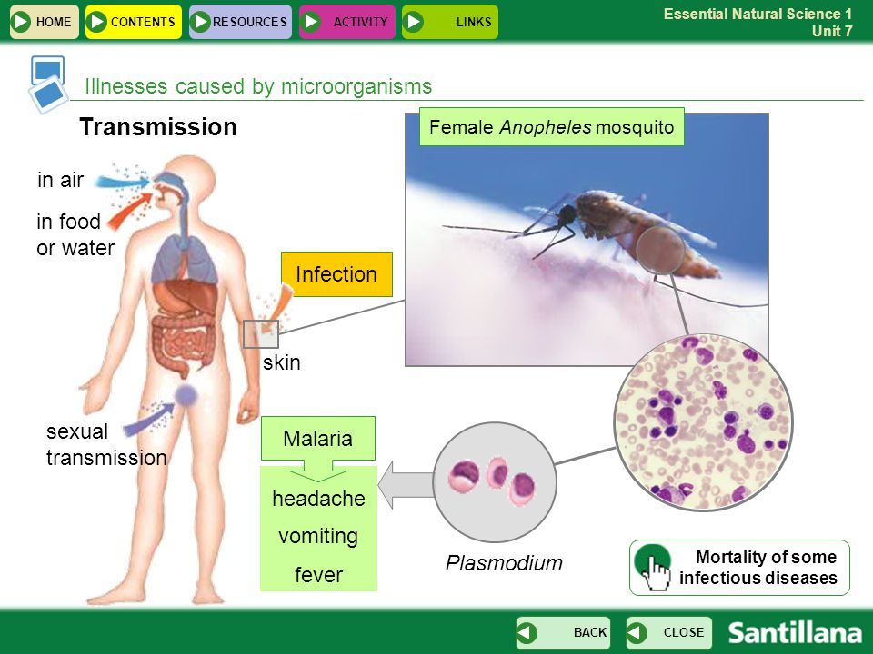 Essential Natural Science 1 Unit 7 Infection headache vomiting fever Illnesses caused by microorganisms Transmission sexual transmission in food or water in air skin Female Anopheles mosquito Plasmodium Malaria HOME RESOURCESCONTENTS CLOSEBACK ACTIVITYLINKS Mortality of some infectious diseases