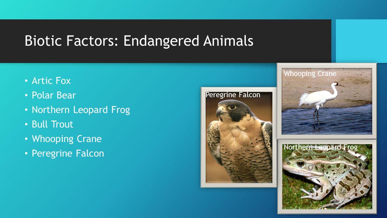 Biotic Factors: Endangered Animals Artic Fox Polar Bear Northern Leopard Frog Bull Trout Whooping Crane Peregrine Falcon Northern Leopard Frog Whooping Crane