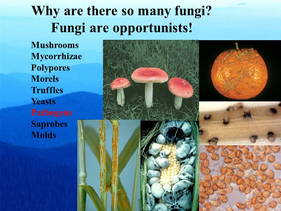Why are there so many fungi.Fungi are opportunists.