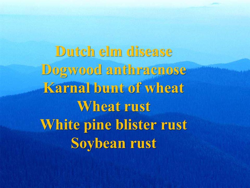 Dutch elm disease Dogwood anthracnose Karnal bunt of wheat Wheat rust White pine blister rust Soybean rust