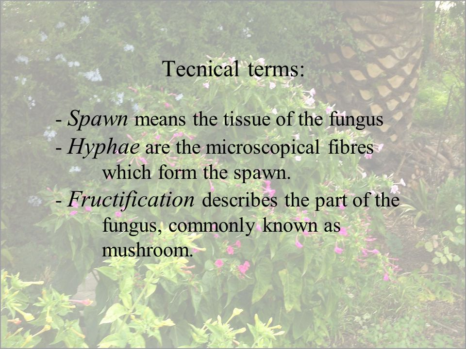 Tecnical terms: - Spawn means the tissue of the fungus - Hyphae are the microscopical fibres which form the spawn.