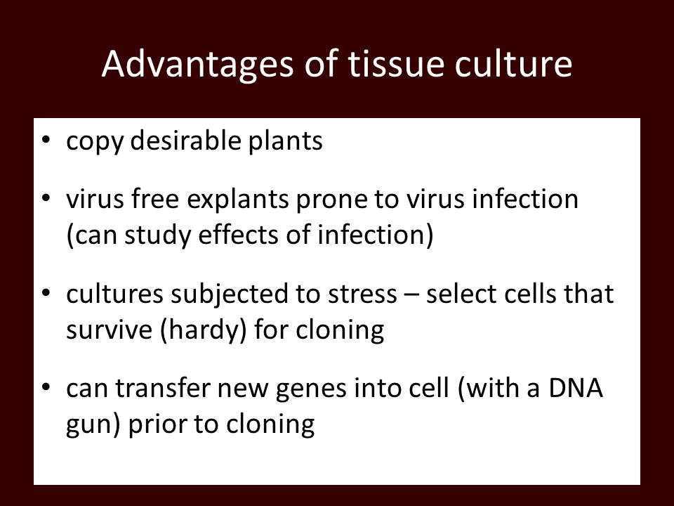Advantages of tissue culture copy desirable plants virus free explants prone to virus infection (can study effects of infection) cultures subjected to stress – select cells that survive (hardy) for cloning can transfer new genes into cell (with a DNA gun) prior to cloning