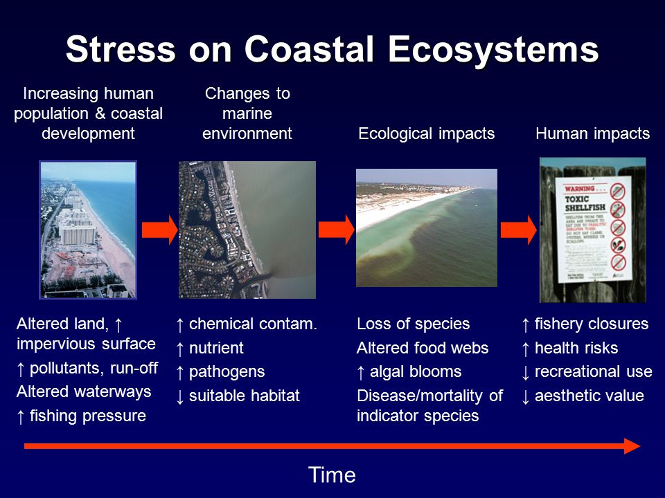 Stress on Coastal Ecosystems Loss of species Altered food webs ↑ algal blooms Disease/mortality of indicator species Ecological impacts ↑ fishery closures ↑ health risks ↓ recreational use ↓ aesthetic value Human impacts ↑ chemical contam.