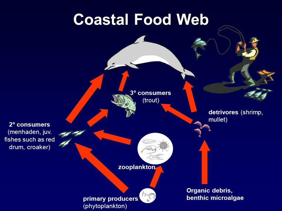 Coastal Food Web 2° consumers (menhaden, juv.