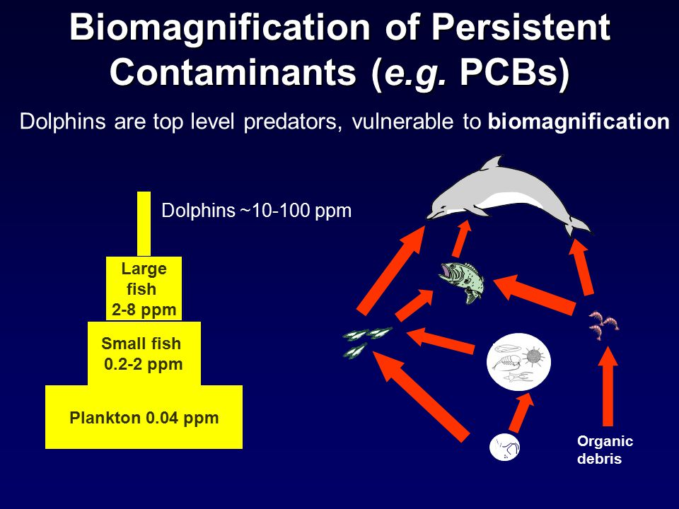Biomagnification of Persistent Contaminants (e.g.