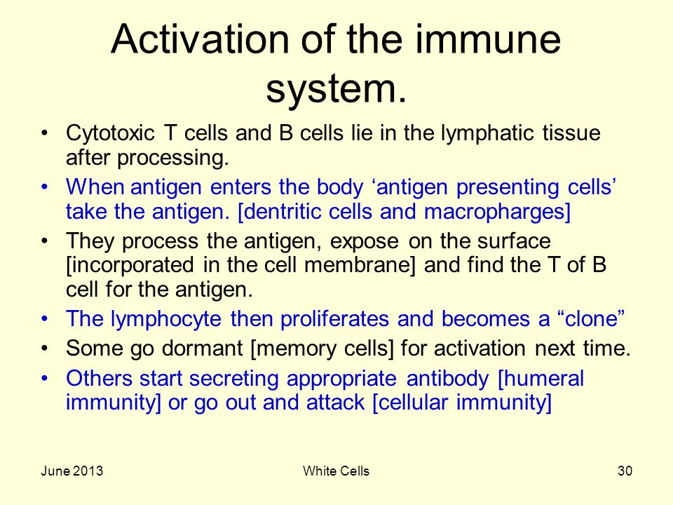 June 2013White Cells30 Activation of the immune system.