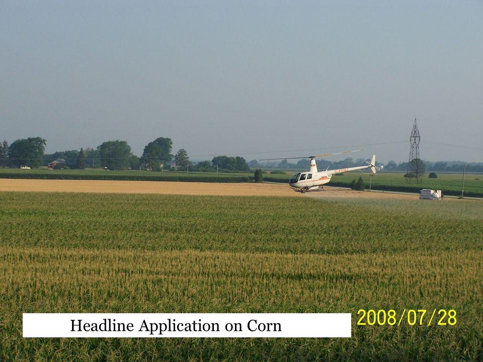 Headline Application on Corn