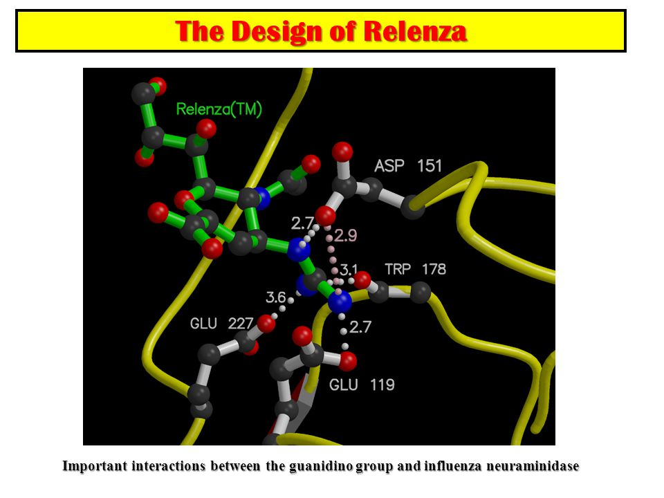 Important interactions between the guanidino group and influenza neuraminidase The Design of Relenza