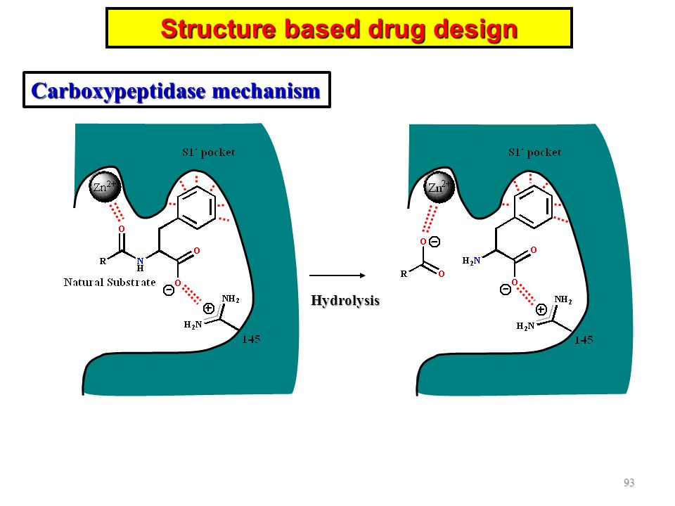 Hydrolysis 93 Structure based drug design Carboxypeptidase mechanism