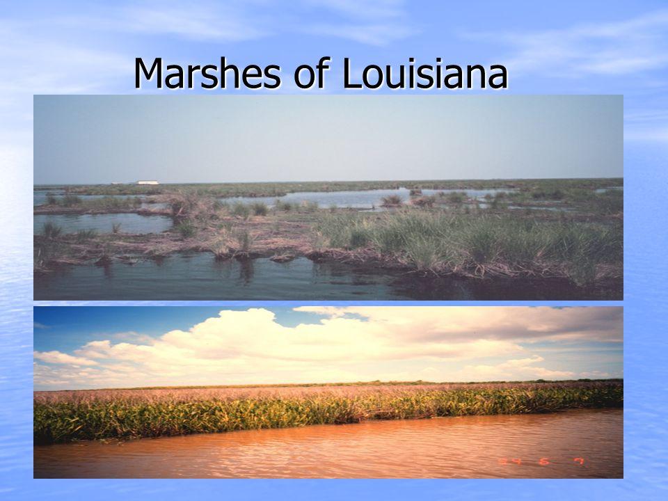 Marshes of Louisiana Marshes of Louisiana