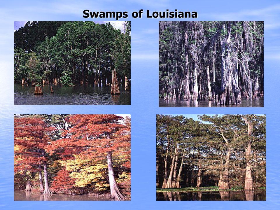 Swamps of Louisiana Swamps of Louisiana