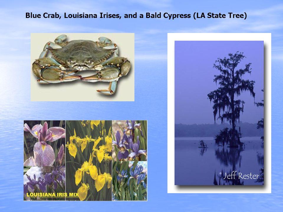 Blue Crab, Louisiana Irises, and a Bald Cypress (LA State Tree)