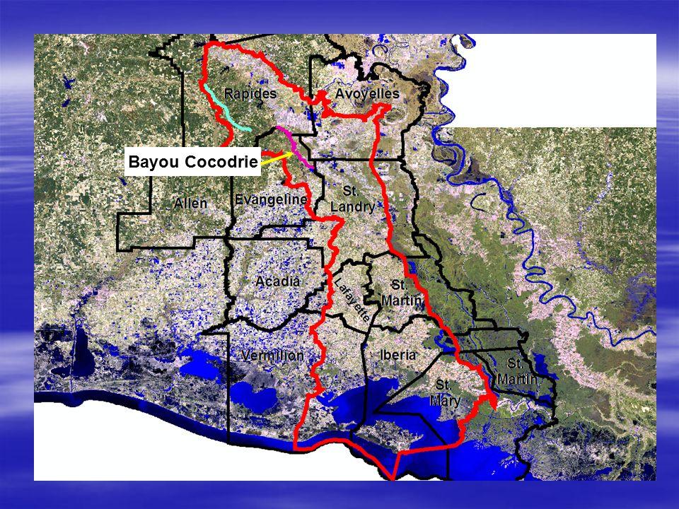 Bayou Cocodrie