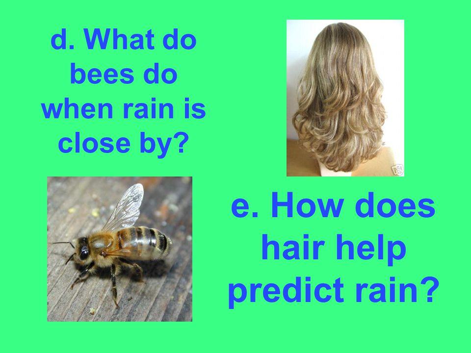 d. What do bees do when rain is close by? e. How does hair help predict rain?