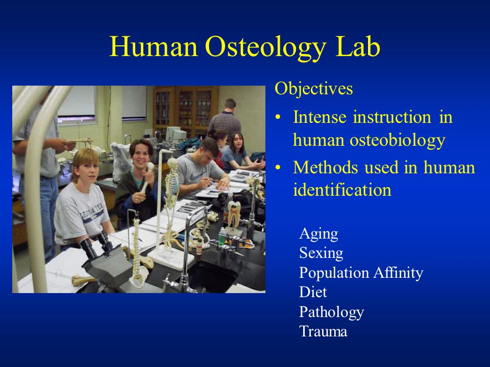 Human Osteology Lab Intense instruction in human osteobiology Methods used in human identification Objectives Aging Sexing Population Affinity Diet Pathology Trauma