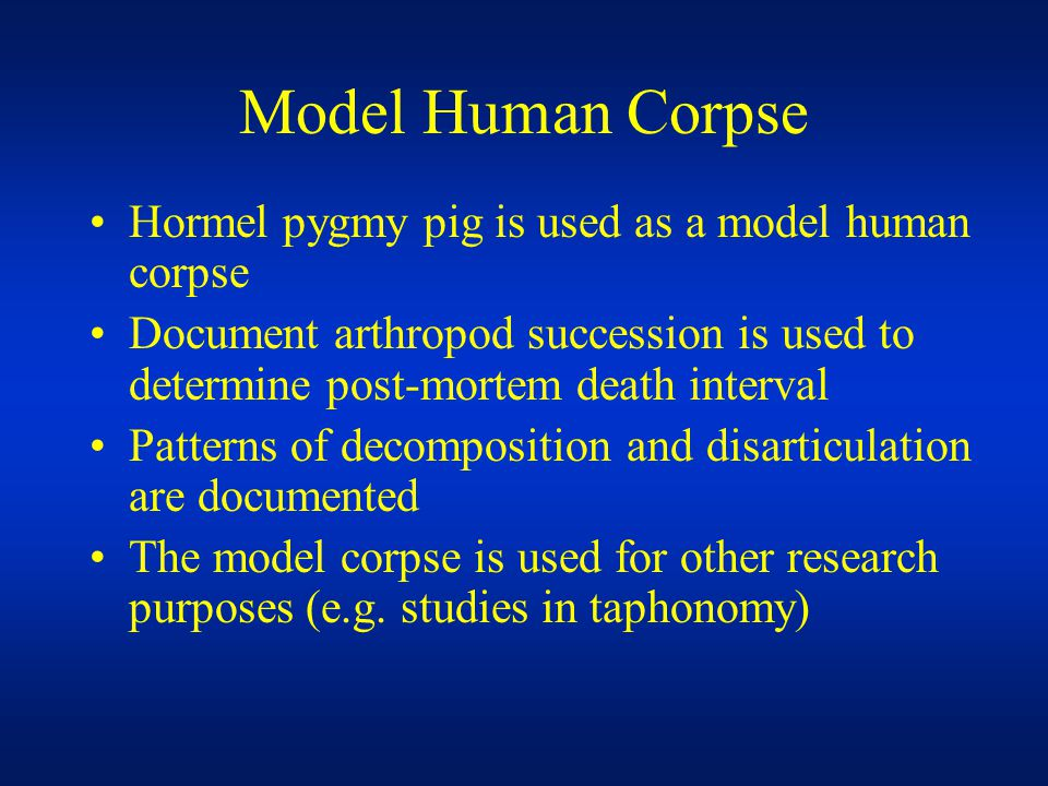 Model Human Corpse Hormel pygmy pig is used as a model human corpse Document arthropod succession is used to determine post-mortem death interval Patterns of decomposition and disarticulation are documented The model corpse is used for other research purposes (e.g.