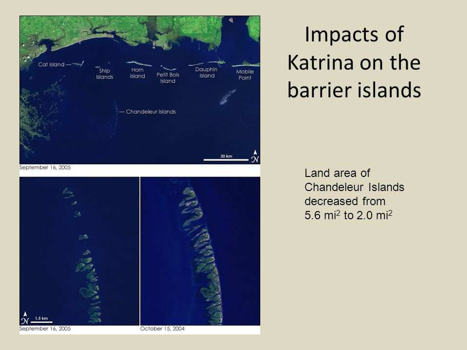 Impacts of Katrina on the barrier islands Land area of Chandeleur Islands decreased from 5.6 mi 2 to 2.0 mi 2