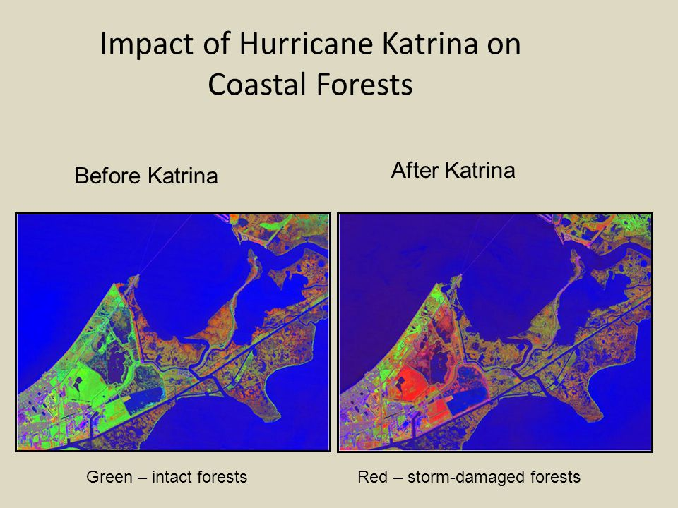 Impact of Hurricane Katrina on Coastal Forests Before Katrina After Katrina Green – intact forestsRed – storm-damaged forests