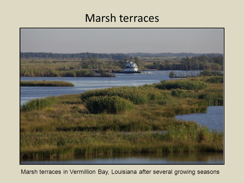 Marsh terraces in Vermillion Bay, Louisiana after several growing seasons Marsh terraces