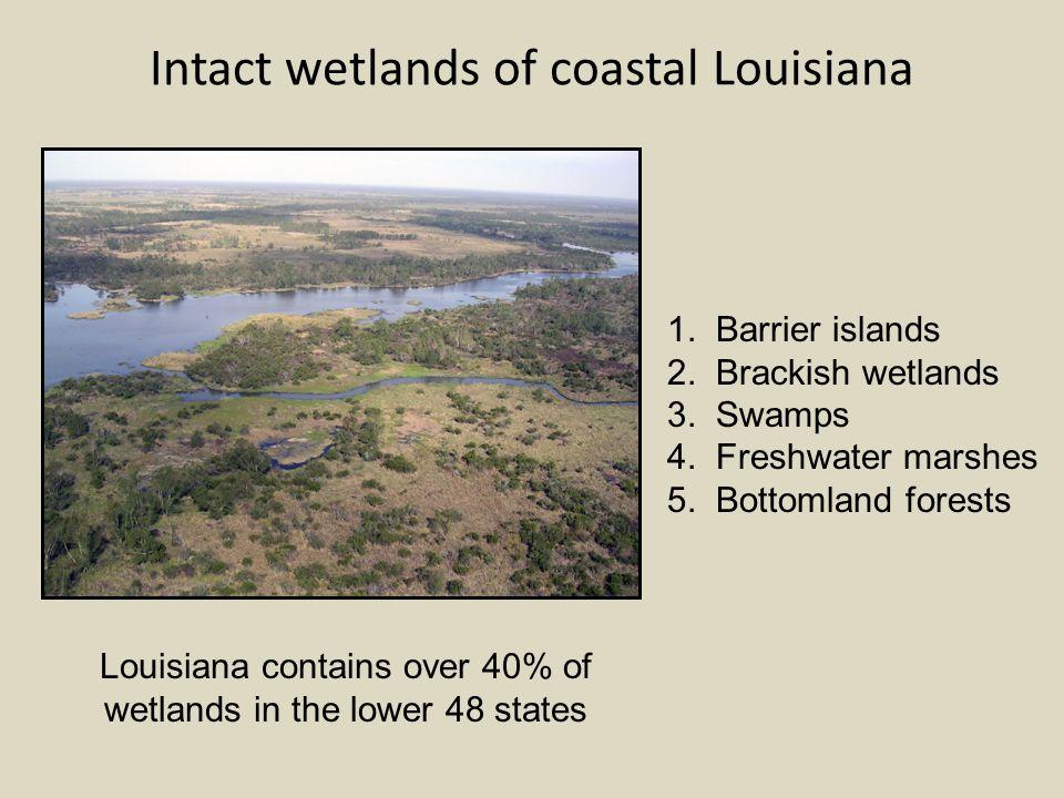 Intact wetlands of coastal Louisiana 1. Barrier islands 2.