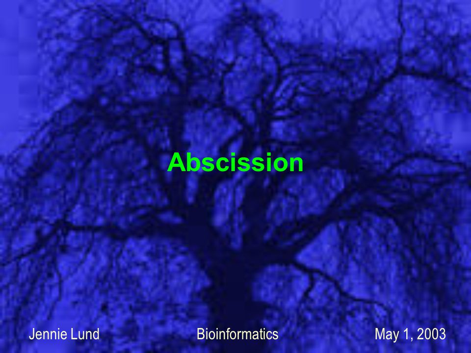 Abscission Jennie Lund Bioinformatics May 1, 2003