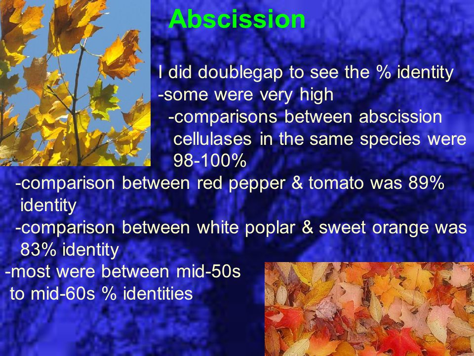 Abscission I did doublegap to see the % identity -some were very high -comparisons between abscission cellulases in the same species were 98-100% -com