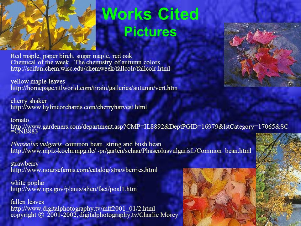 Works Cited Pictures Red maple, paper birch, sugar maple, red oak Chemical of the week. The chemistry of autumn colors http://scifun.chem.wisc.edu/che