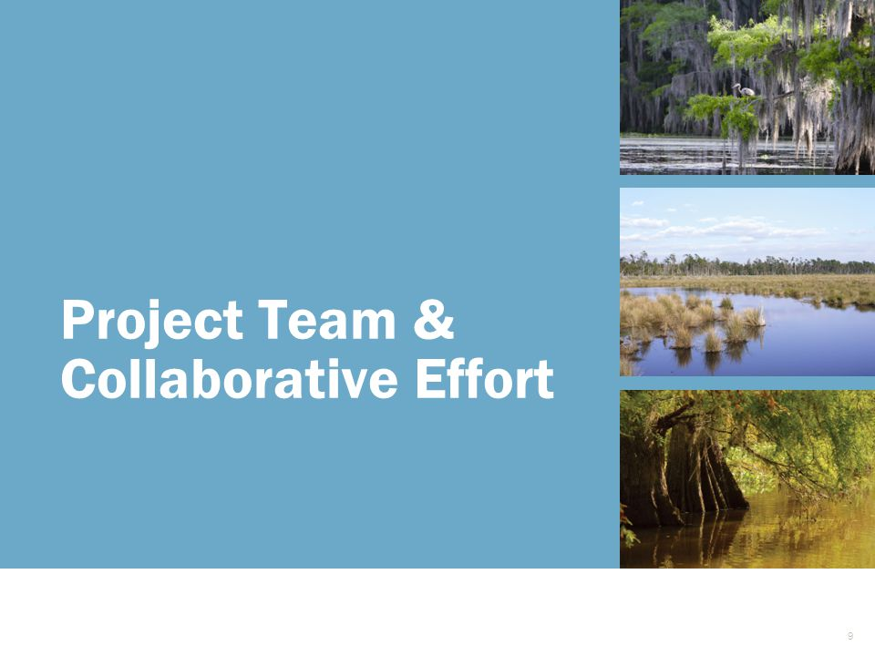 Project Team & Collaborative Effort 9