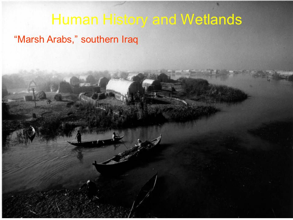 Marsh Arabs, southern Iraq Human History and Wetlands