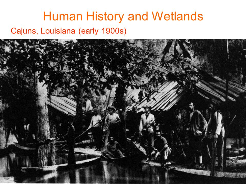 Cajuns, Louisiana (early 1900s) Human History and Wetlands