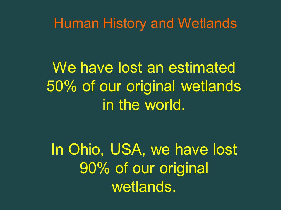 We have lost an estimated 50% of our original wetlands in the world.
